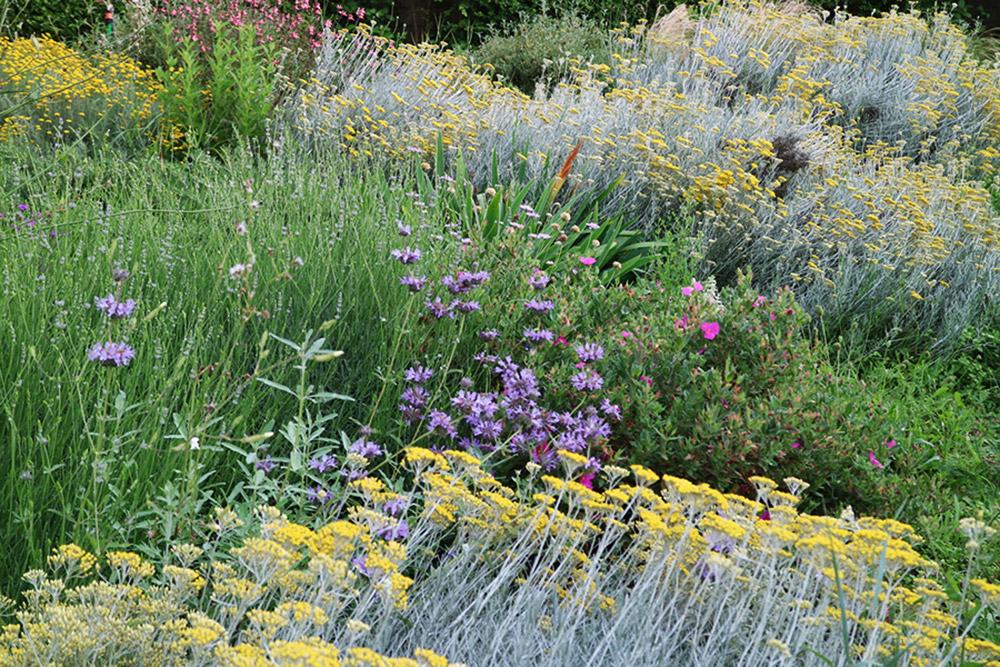 Giardino naturale, Riano   Stefano Assogna - Garden Tutor
