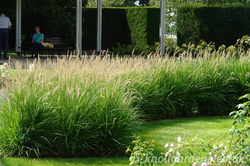 Garden Design Siepi Graminacee - Informal garden hedges