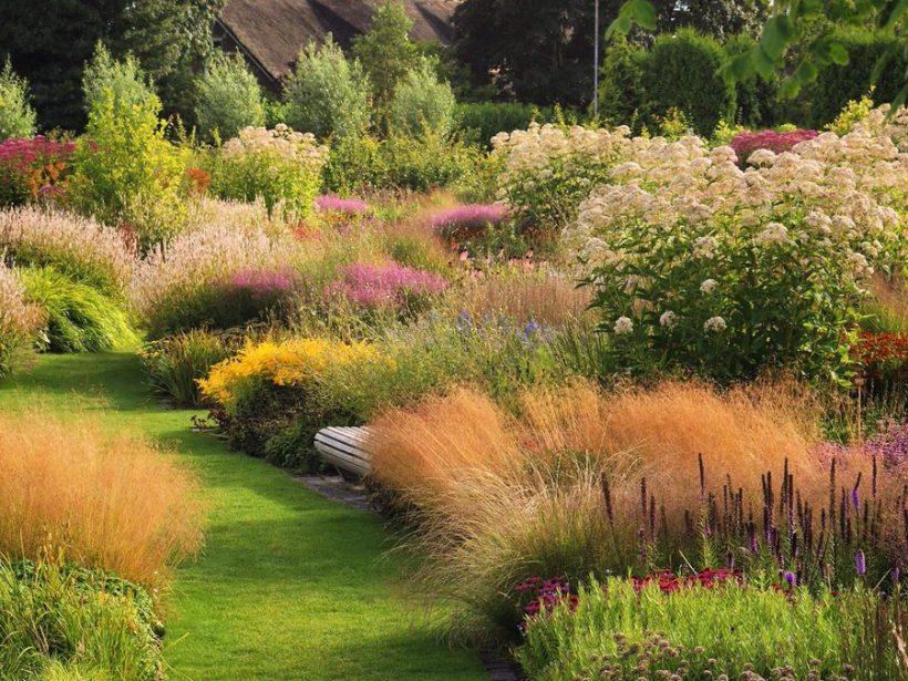 Garden Design Siepi Graminacee