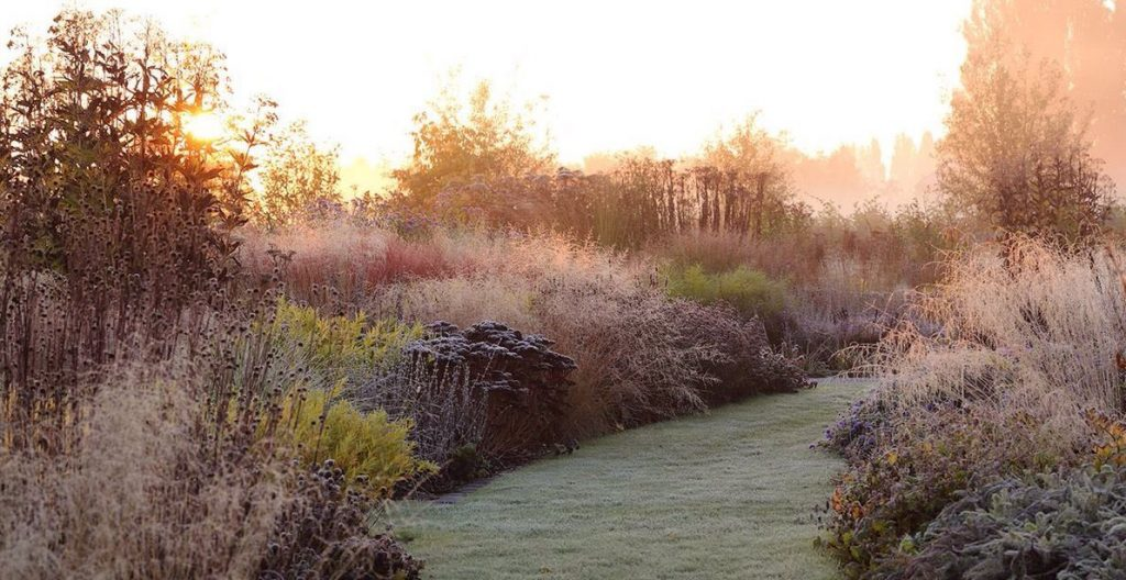Garden Design Siepi di graminacee - Vlinderhof inverno