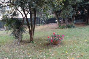 giardino con foglie