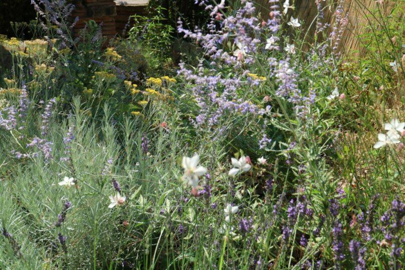 colori giardino