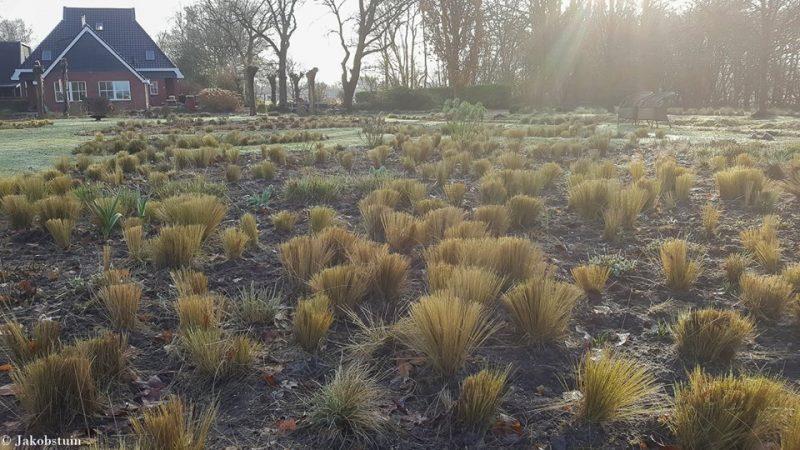 giardini olandesi